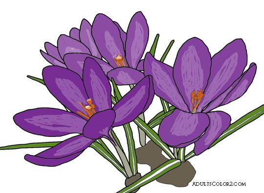 crocus one of the earliest spring flowers derived from wikimedia photo