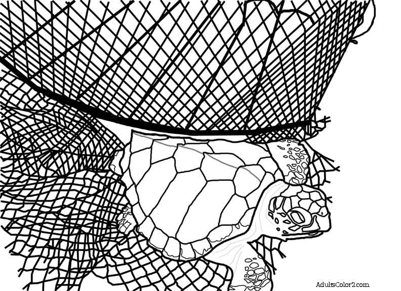 Sea turtle exiting a net drawing.