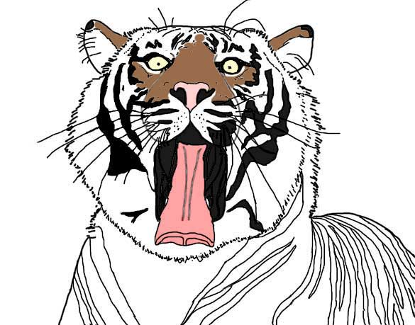 Colored sketch of yawning tiger.