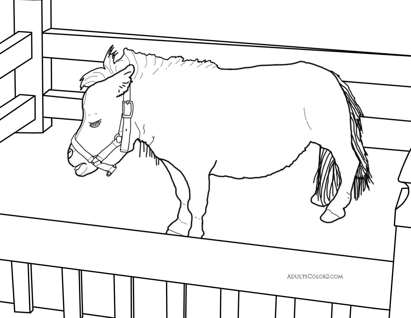 Thumbelina, tiniest horse.