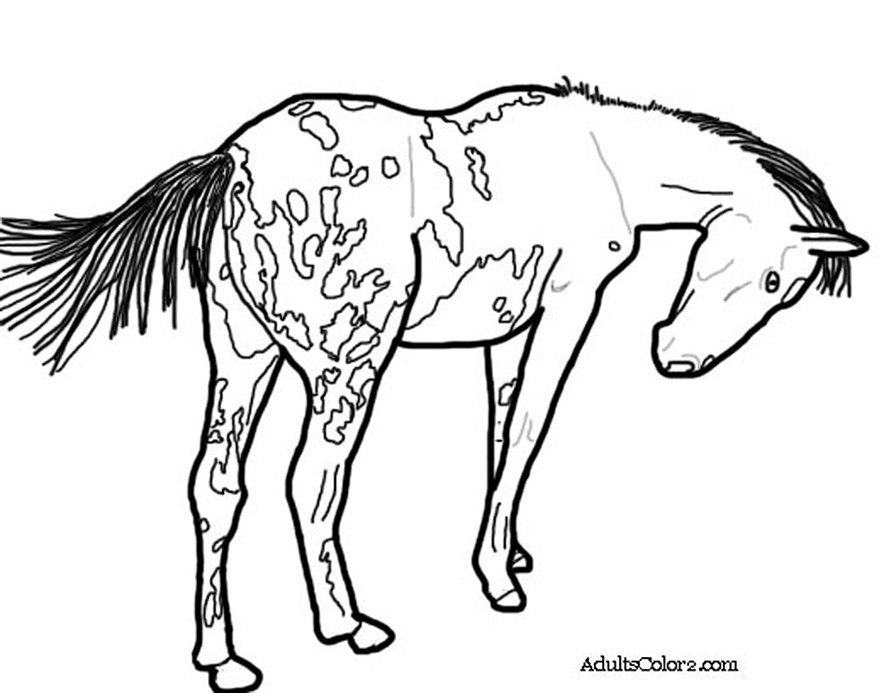 Horse Coloring Pages: Pick and Print Your Pony