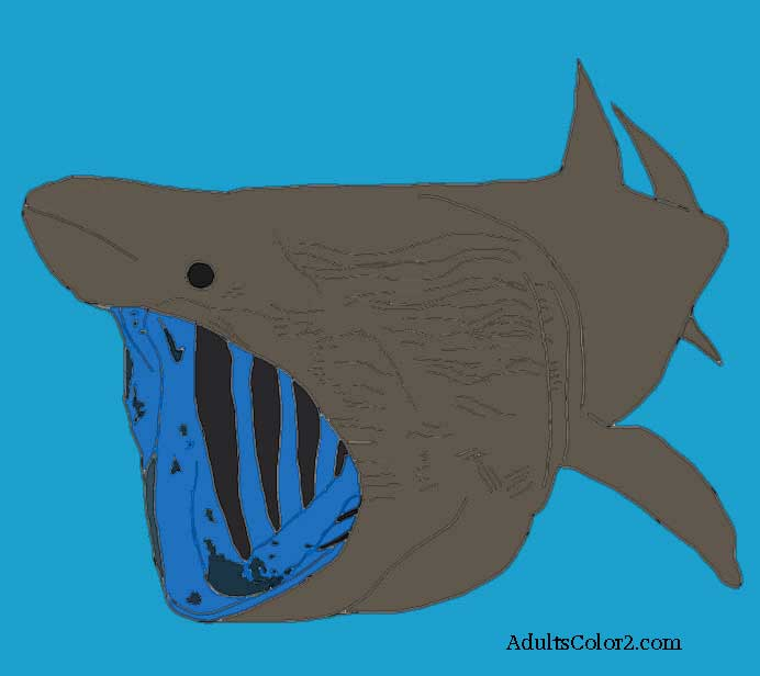 Basking shark filter feeding.