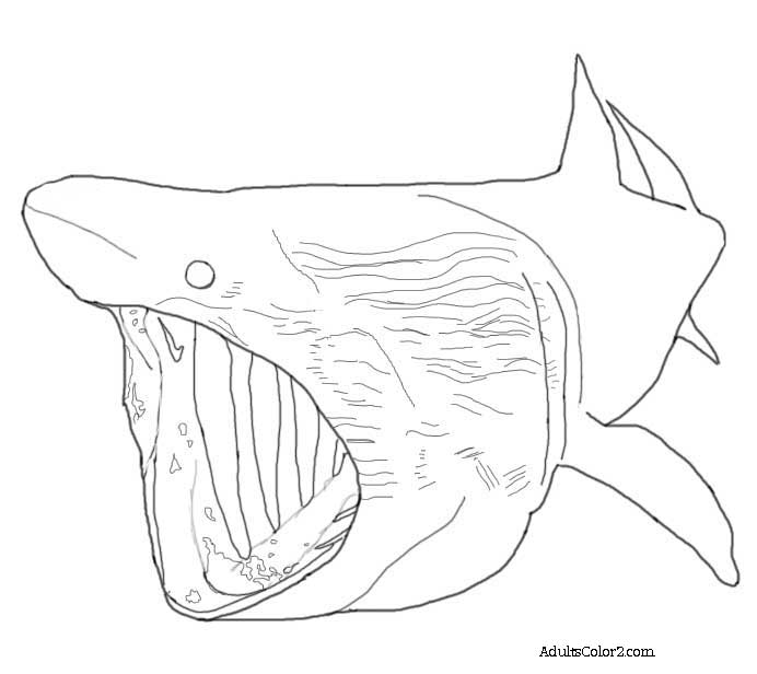 Basking shark coloring page.