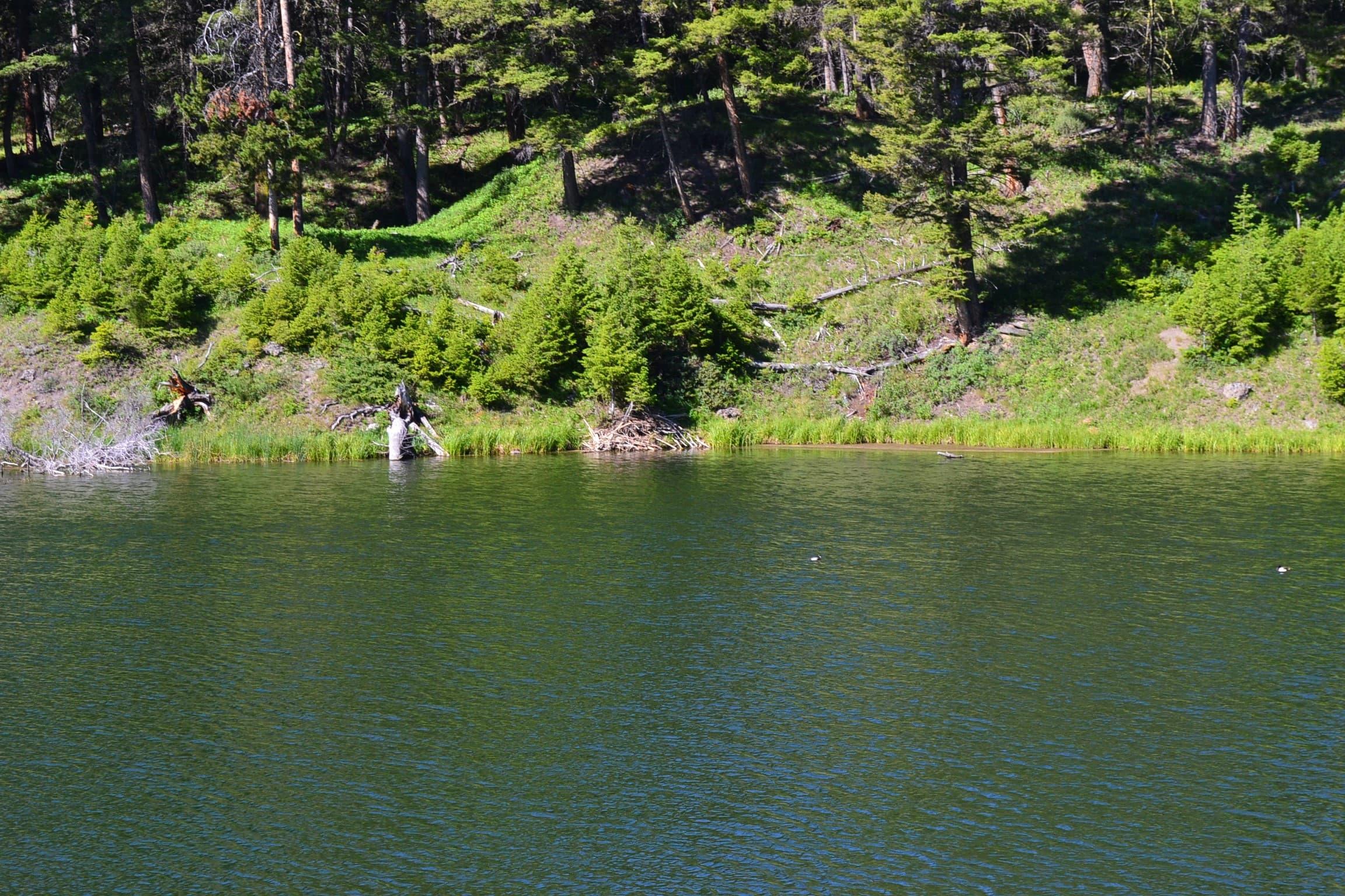 Beaver lodge on the pond's far shore.