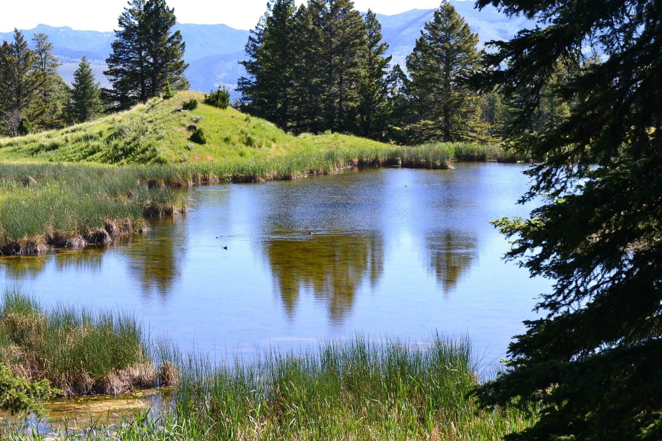 Beaver pond located above Mammoth Falls tourist center.
