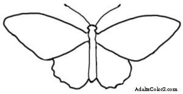 Birdwing butterfly outline.