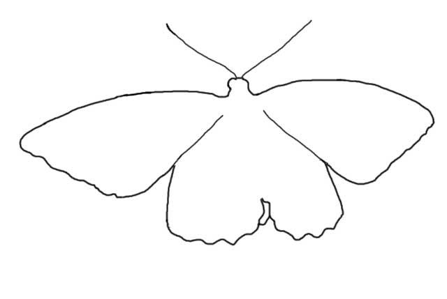 In flight birdwing butterfly.