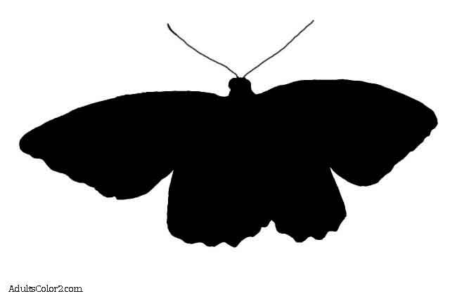 Silohuette of a flying birdwing butterfly