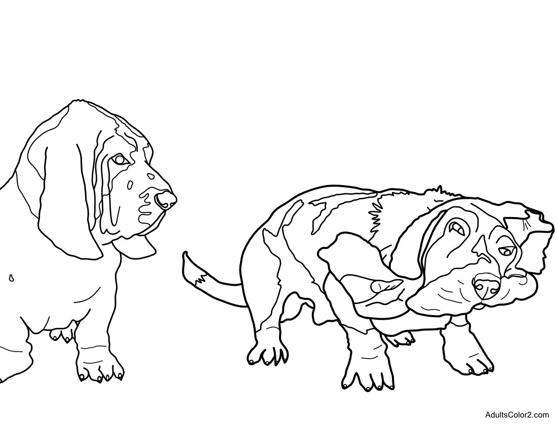Bizarre basset hound coloring page.