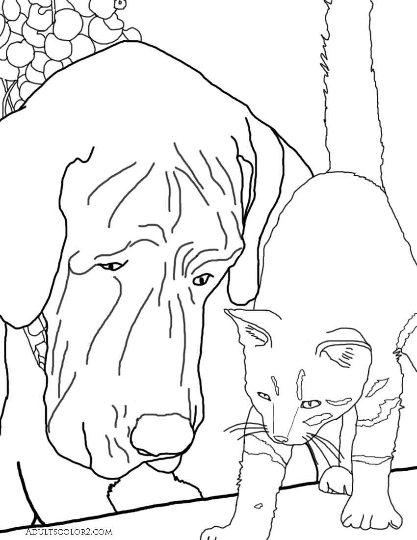 Drawing of a cat and a dog looking at something.  Derived from a phot on Wikimedia Commons.
