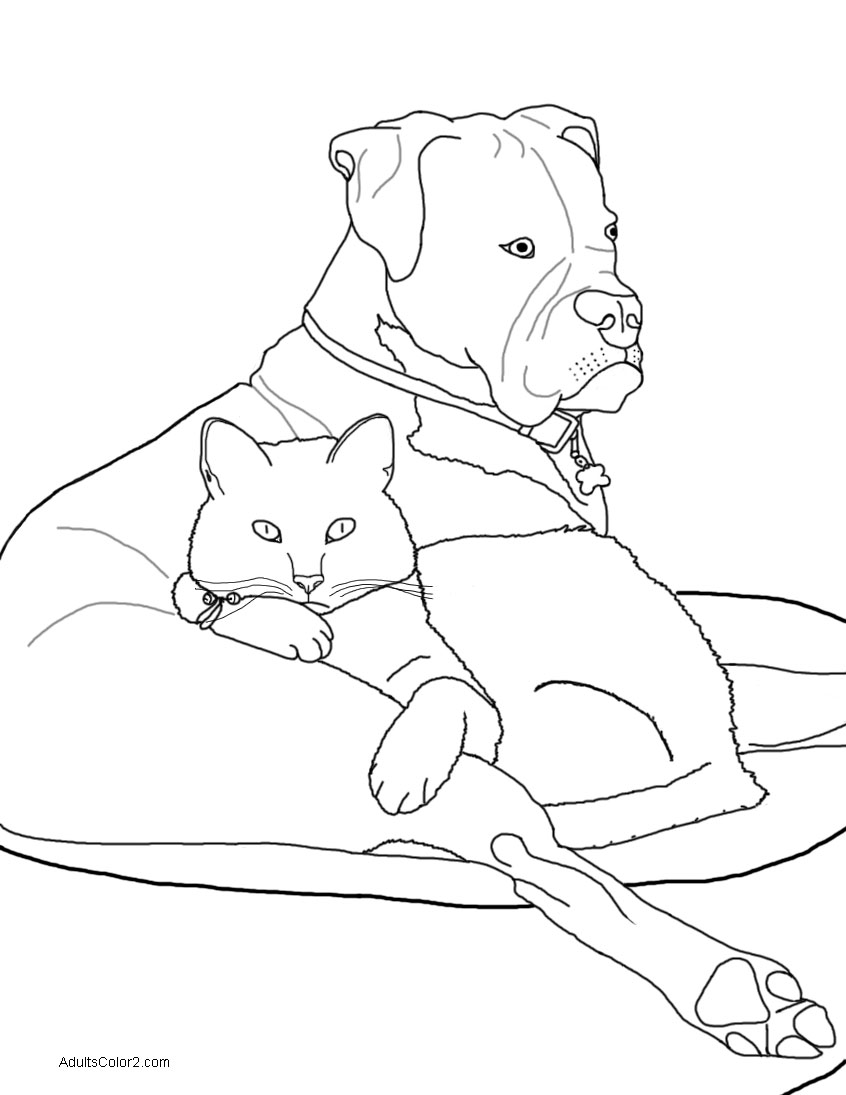 Cozy cat and boxer.
