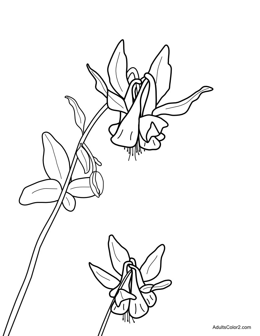 Two columbine blooms for coloring.