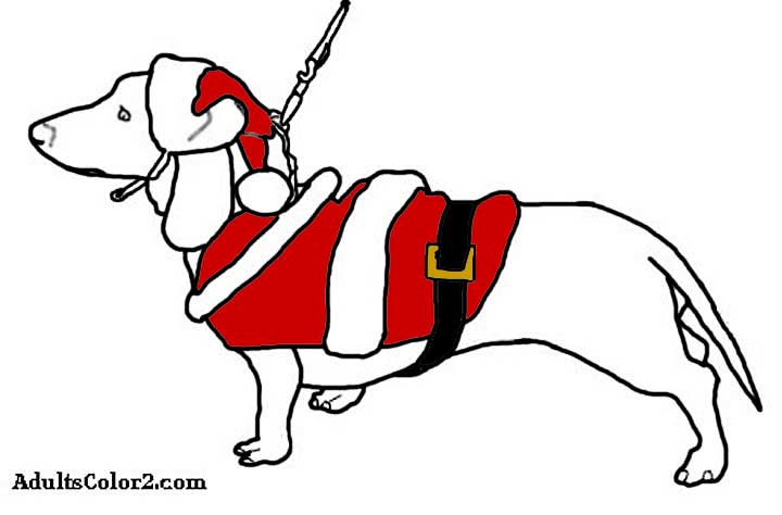 Wiener dog in a colored in santa suit.