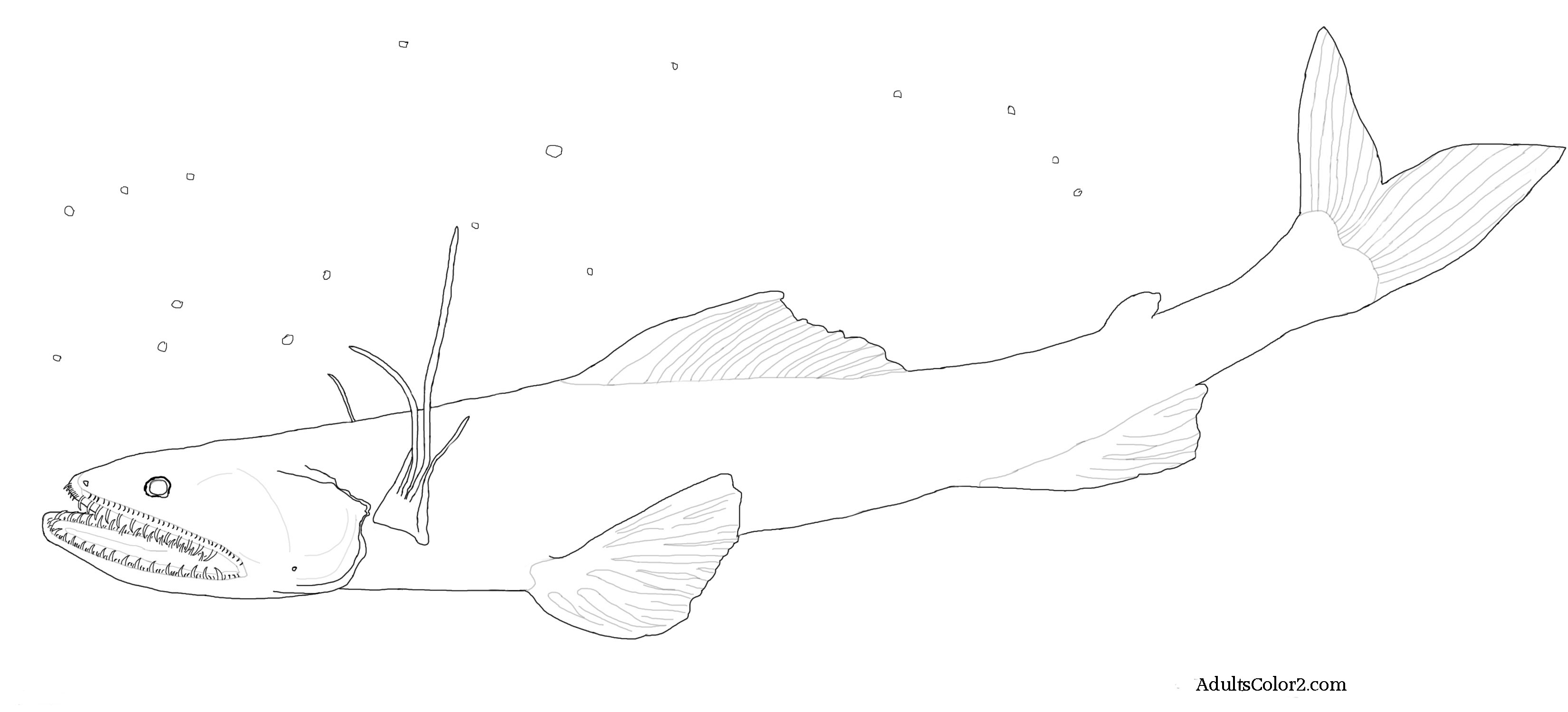 Deepsea lizardfish waiting for his next meal. Line drawing derived from a NOAA photo on Wikimedia.