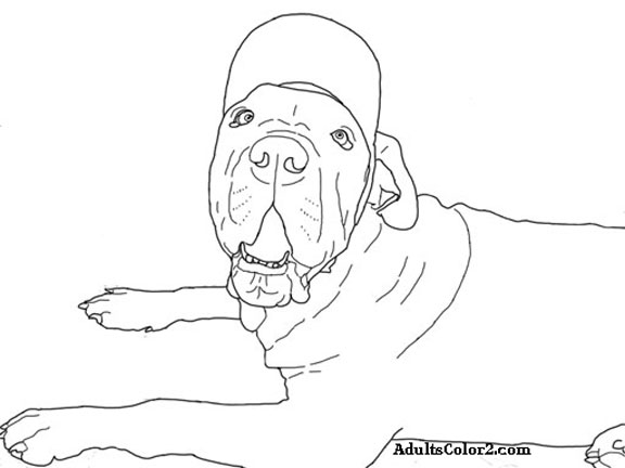 Big dog with hat coloring picture at AdultsColor2.com