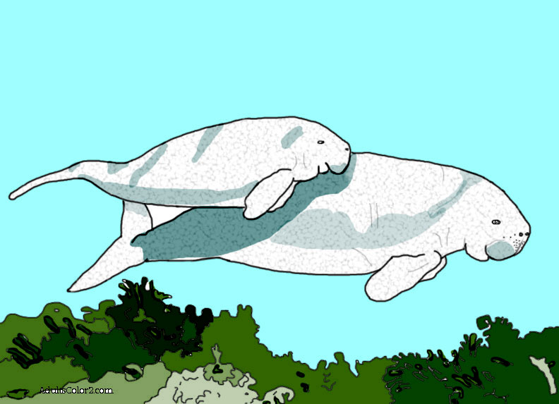 Momma dugong and calf picture colored.