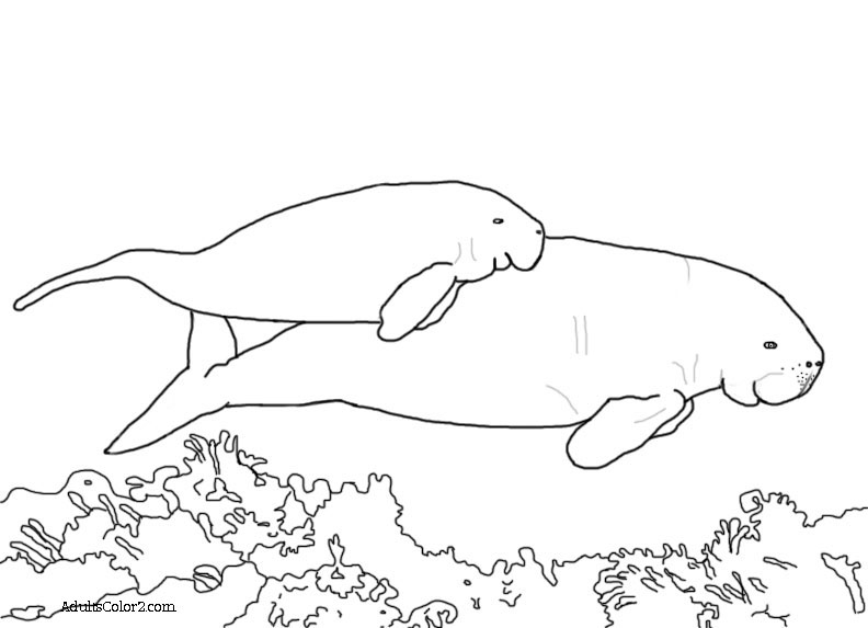 Line drawing of a momma and baby dugong swimming.