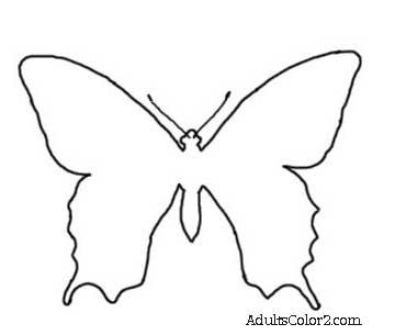 Unidentified european butterfly outline.