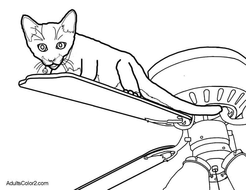 Cat on a fan.