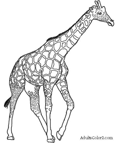 Free coloring pages of giraffe drawing for Giraffe draw something