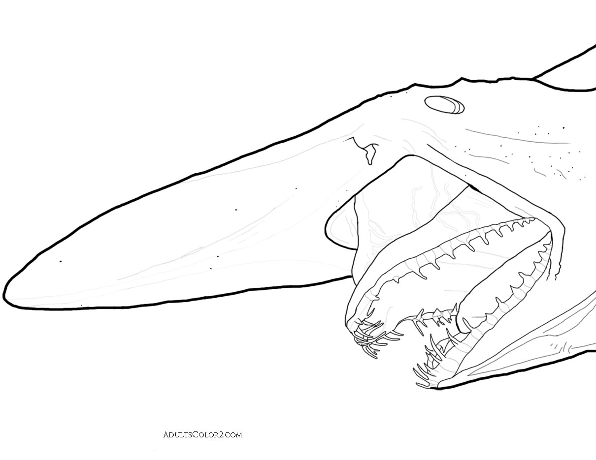 Goblin shark head