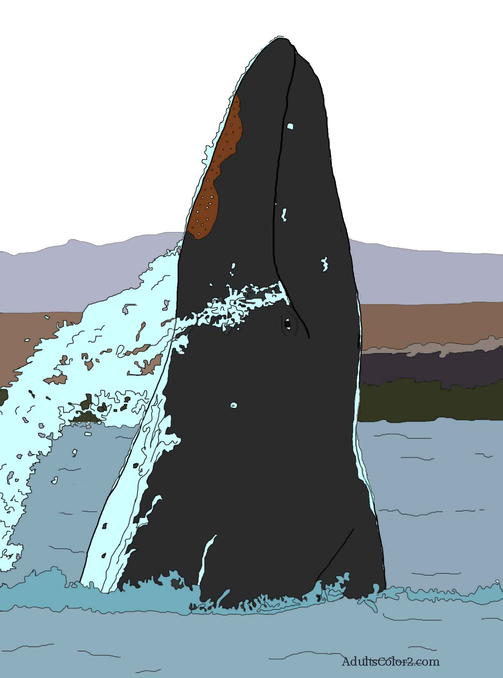 Colored in drawing of a gray whale.