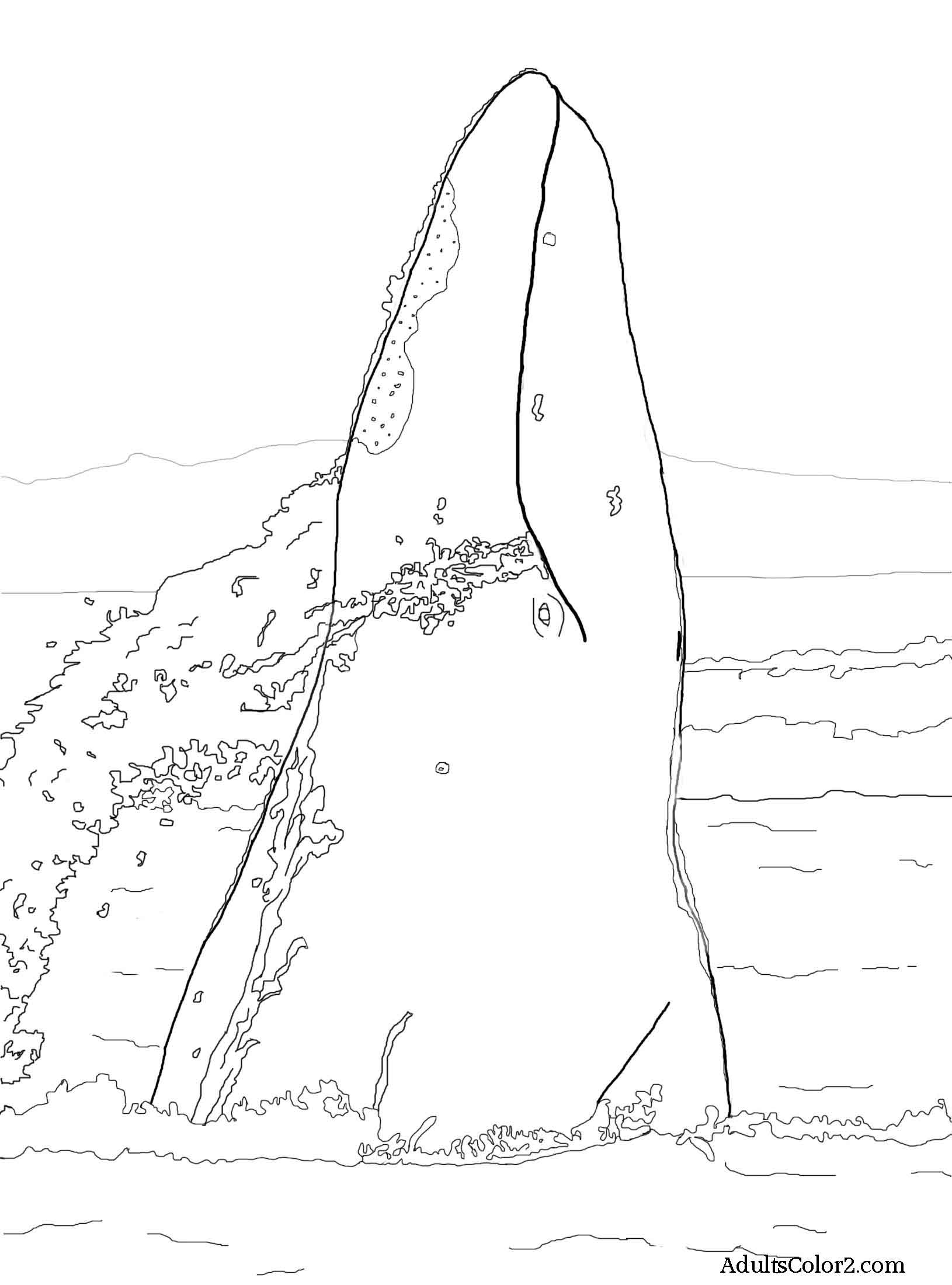 Drawing of a gray whale breaching.