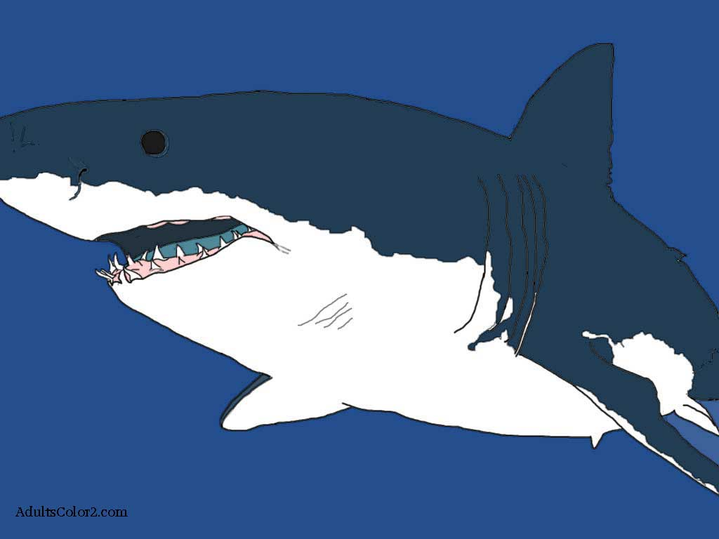 great white shark pictures to color