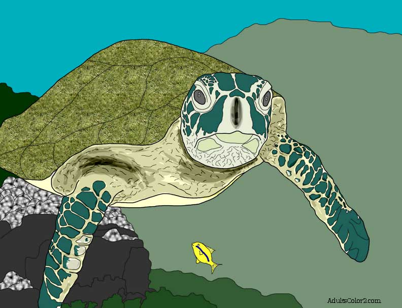 Sea turtle drawing colored.