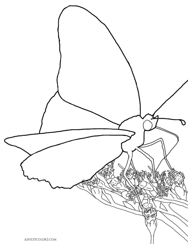 Gulf butterfly on flowers outline.