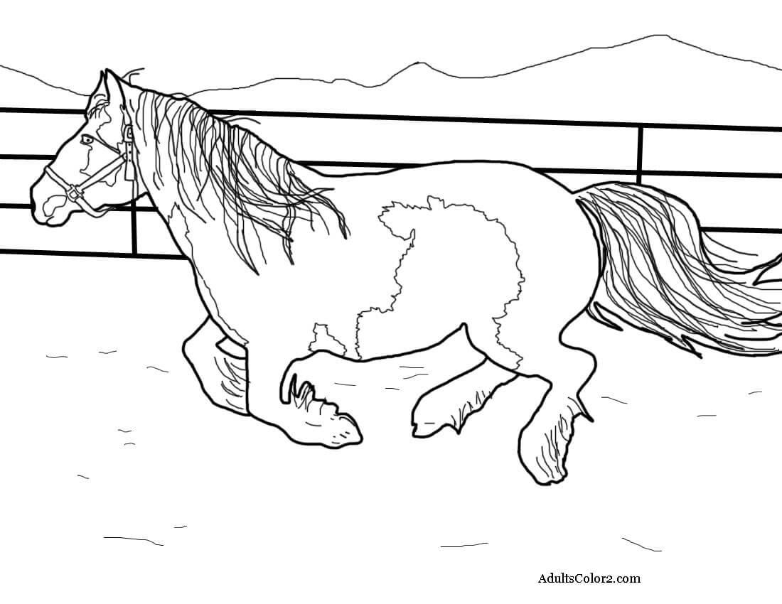 Gypsy Vanner horse.