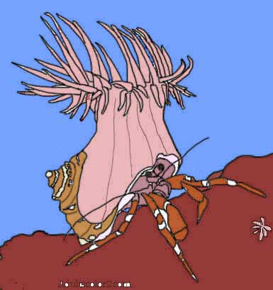 Colored in line drawing of a crab with an anemone on its shell.
