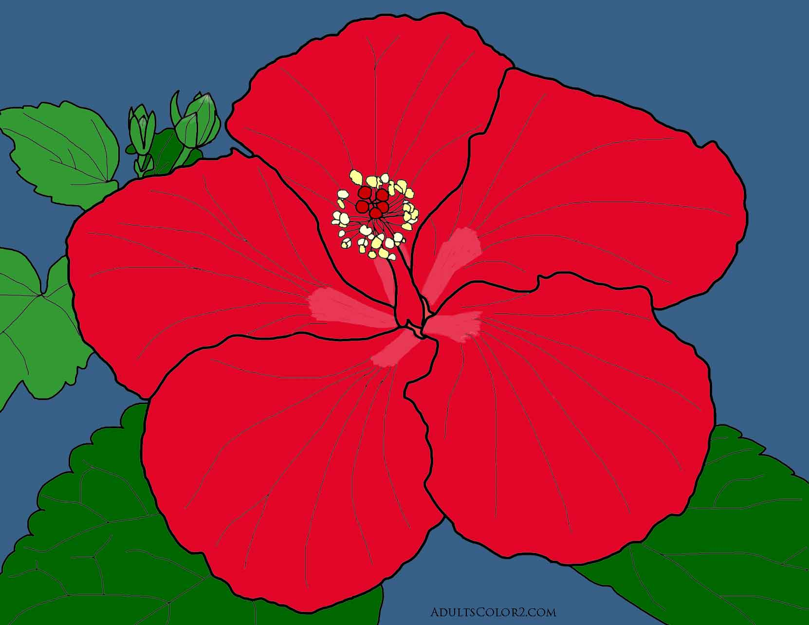 Red hibiscus flower traced from my own photo.