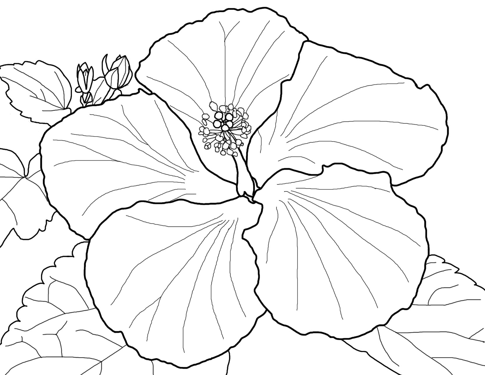 Coloring Pages Of Hibiscus Flowers : Hibiscus flower coloring pages for kids cooloring