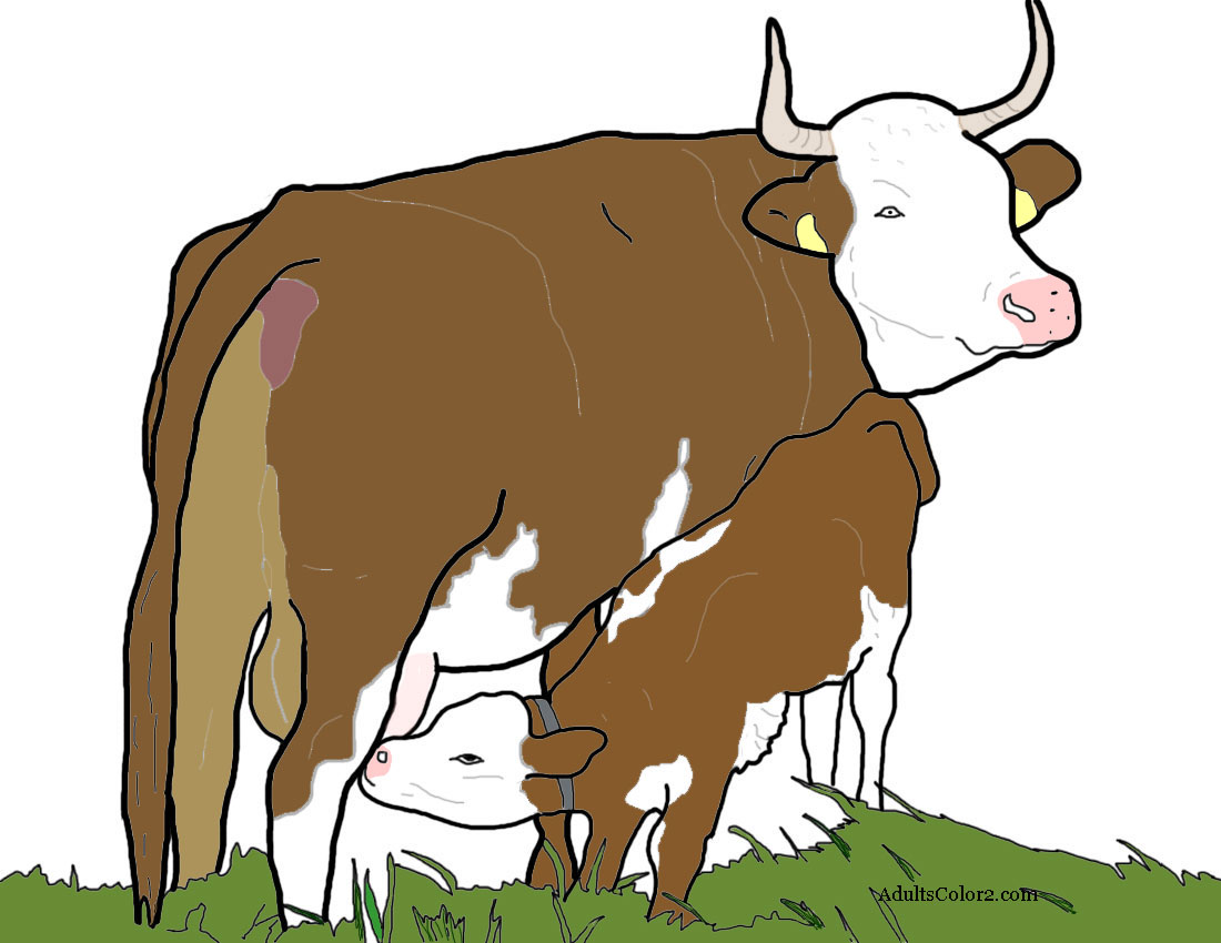 Cow nursing a calf.