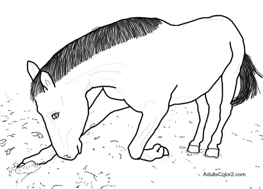 Horse bowing.