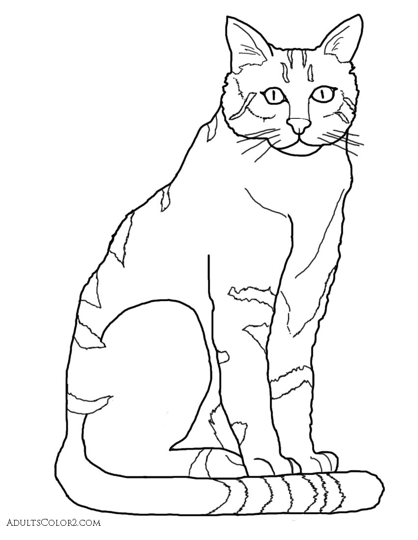 Parade coloring pages to print for adults - Drawing Of The Wildcat Ancestor Of House Cats Derived From A Photo On Wikimedia Commons Completed Coloring Page