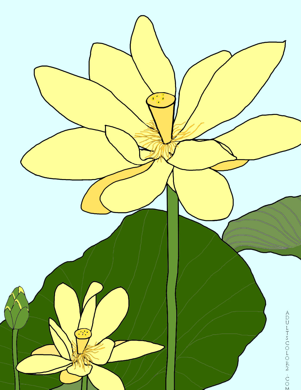 Lotus flower or water lily coloring page lotus flowering mightylinksfo