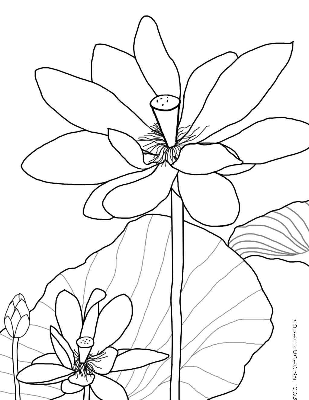 Coloring pages of flower buds - Fully Opened Blossoms With Bud