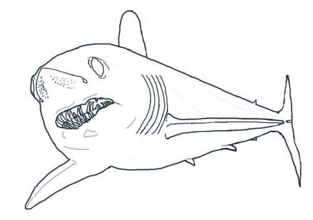 Free Mako Mermaids Coloring Pages Mako Shark Coloring Page