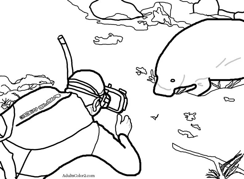 Manatee coloring page, she's posing for a diver.