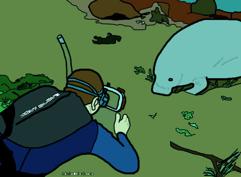 Diver photographing a munching manatee.