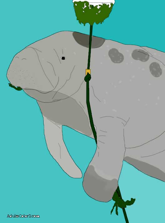 Colored drawing of a munching manatee.