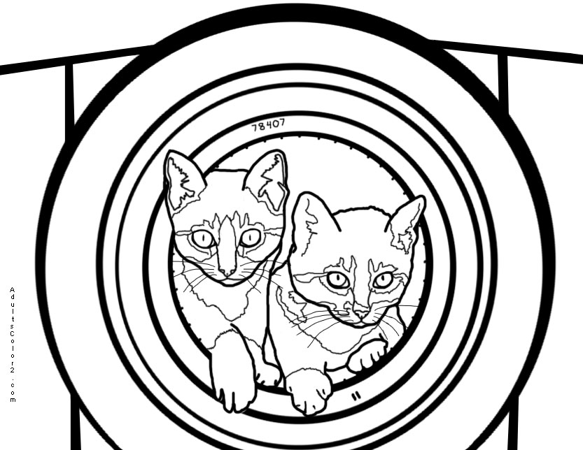 Kittens in gun barrel.