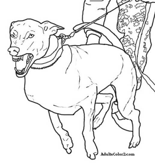 Working Dogs Crucial Caninesrhadultscolor2: Show Dogs Coloring Pages At Baymontmadison.com
