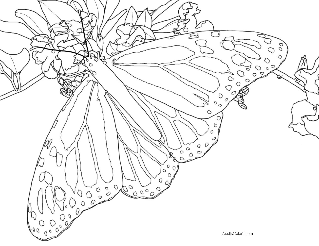 Line drawing of a monarch butterfly.
