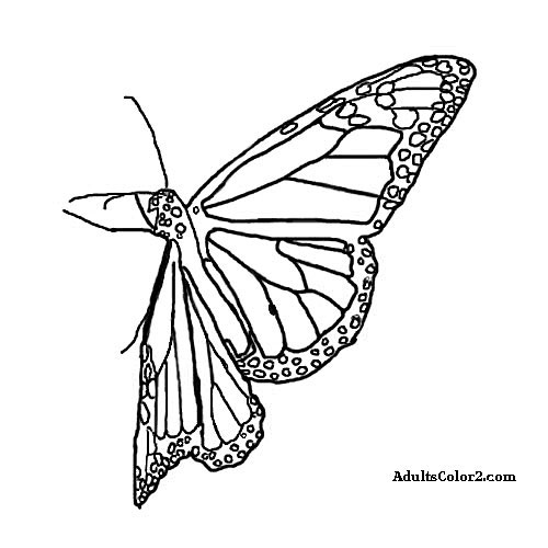 Sketch of a monarch butterfly.
