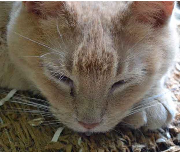 Sleeping house cat.
