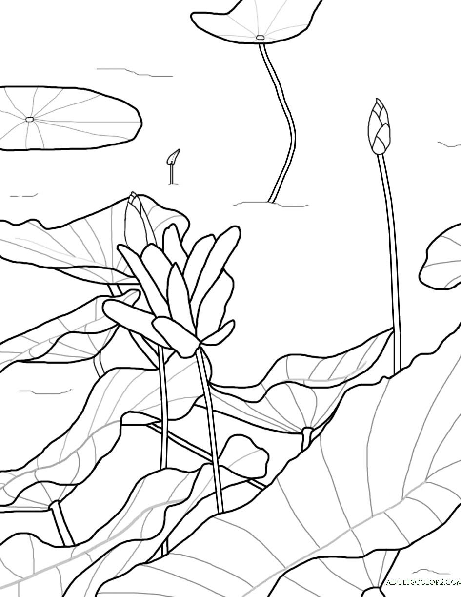 Coloring pages of flower buds - Lotus With Two Buds