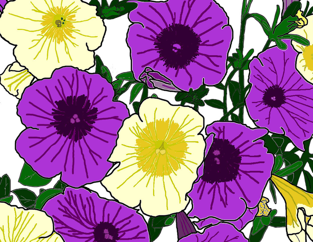 Yellow and purple petunias.
